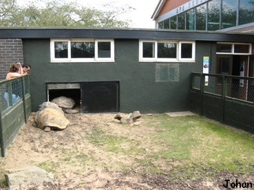 Twycross zoo world primate centre for Enclos exterieur tortue